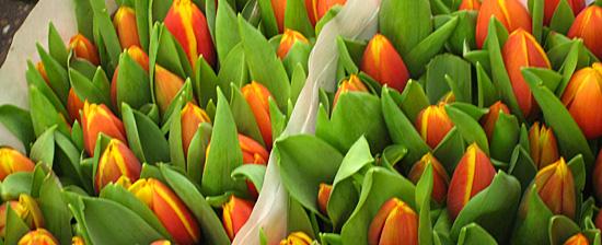 Amsterdam_tulpen.JPG